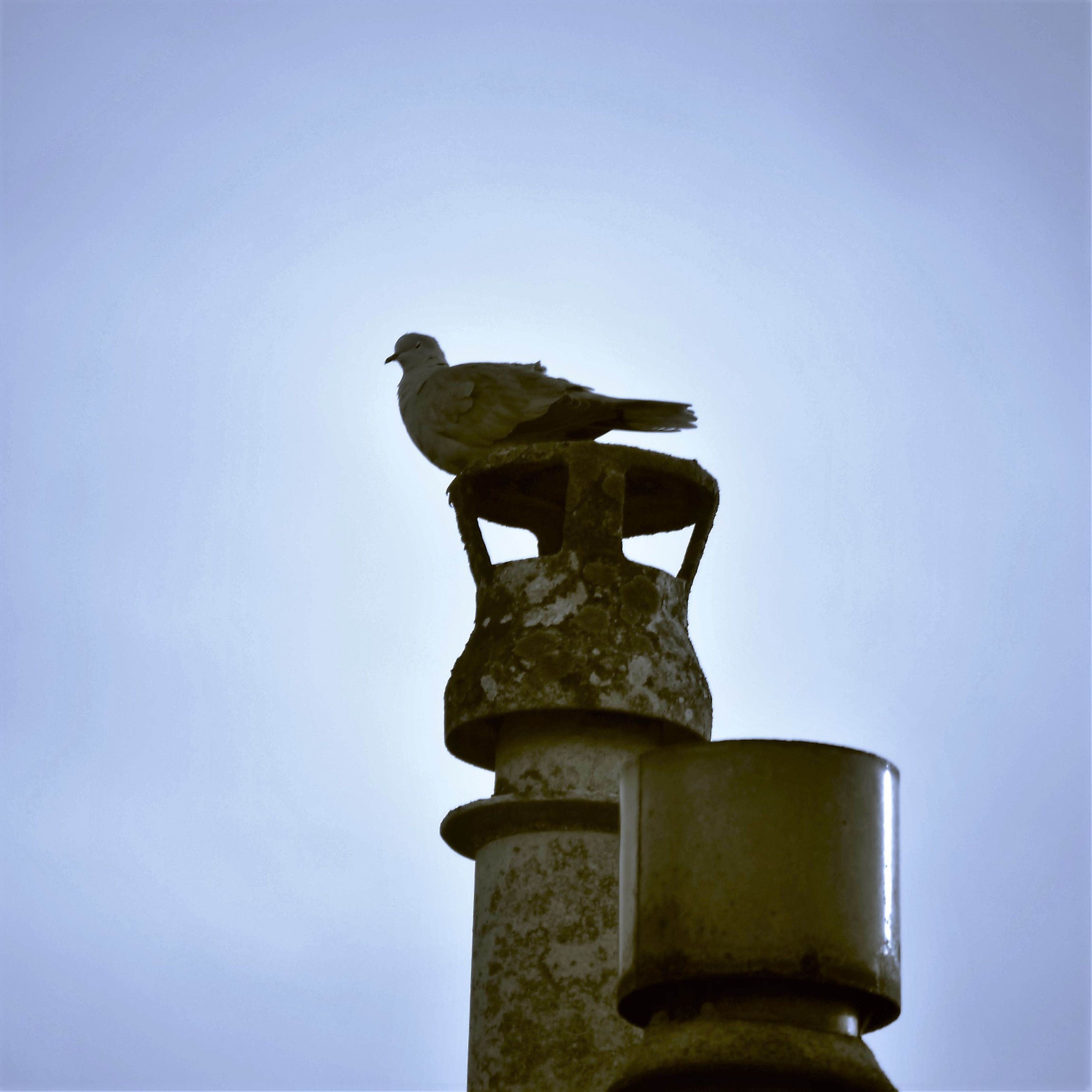 clear sky, low angle view, copy space, statue, animal themes, one animal, sculpture, human representation, animals in the wild, wildlife, bird, art, blue, art and craft, animal representation, no people, day, outdoors, perching