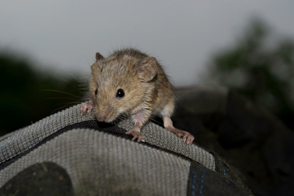 Beautiful stock photos of mouse, Animal Head, Animal Themes, Anxiety, Close-Up
