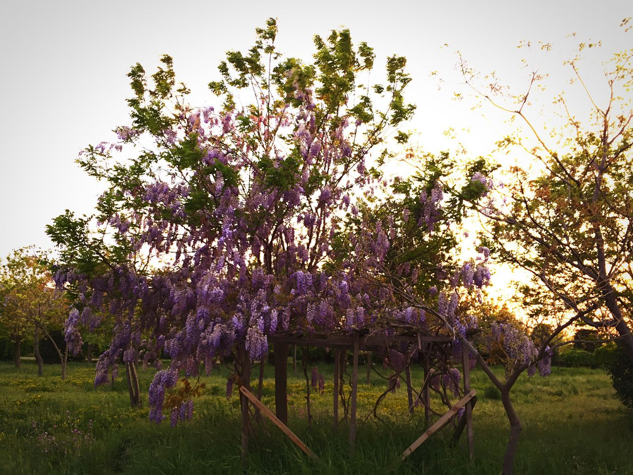 First Eyeem Photo Photooftheday Tree Flower Purple Blossom Growth Nature Beauty In Nature No People Springtime Branch Freshness Fragility Pink Color Scented Sky Outdoors Day Izmir Photography Turkey Kentormani EyeEm Best Shots