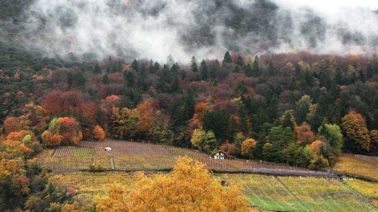 Ollon - Autumn Mists Autumn Autumn Colours Cloud - Sky Early Morning Hillside Scene Mists Ollongong Trees And Sky
