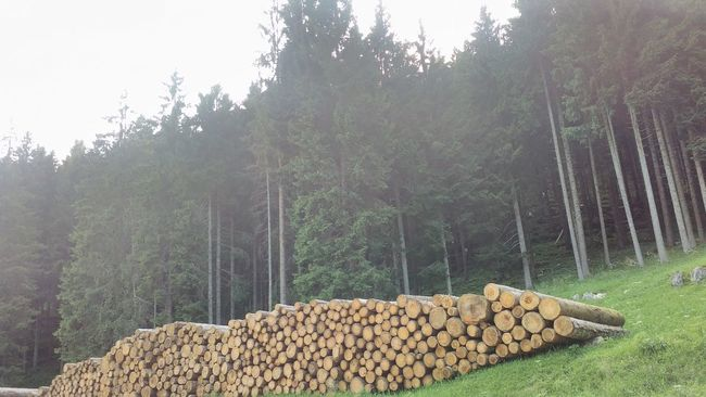 Abundance Agriculture Beauty In Nature Day Firewood Green Color Growth Harvesting Haystack Lumber Industry Nature No People Non-urban Scene Outdoors Rural Scene Scenics Solitude Stone Material Tranquil Scene Tranquility Tree