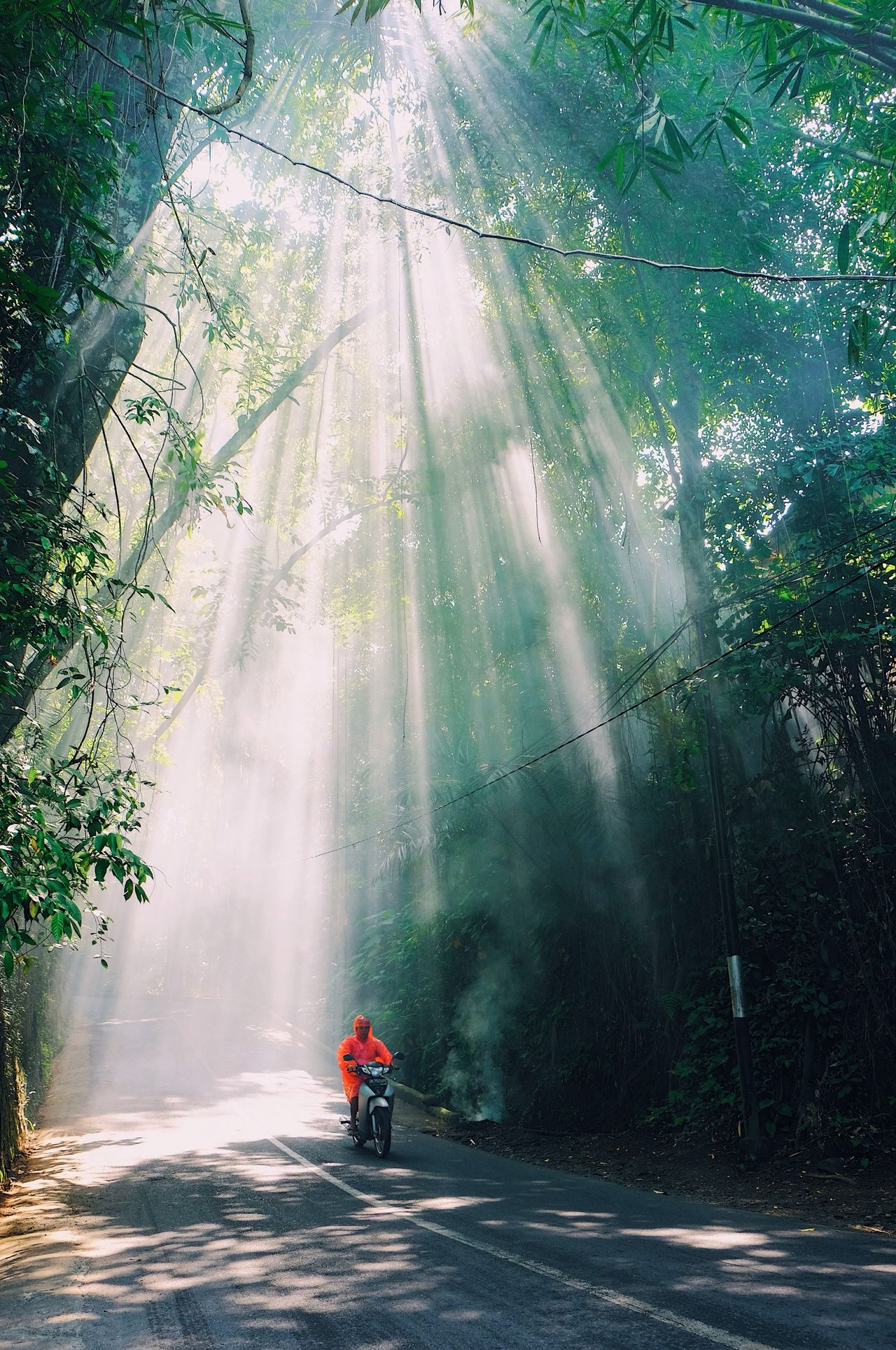 Tree Nature Men Landscape Outdoors Beauty In Nature One Person Lonesome Fog Day Adult Bike Jungle Bali Ubud INDONESIA EyeEmNewHere