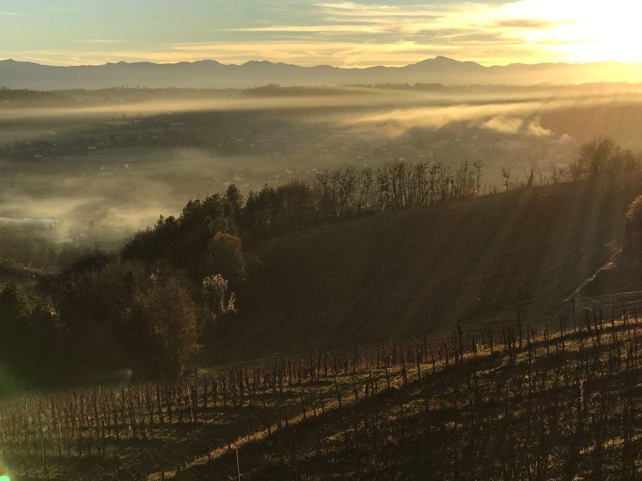 Jurançon Pyrenees Vignes Mountain No People Agriculture Fog Landscape Nature Beauty In Nature Scenics Sunset Outdoors Vineyard