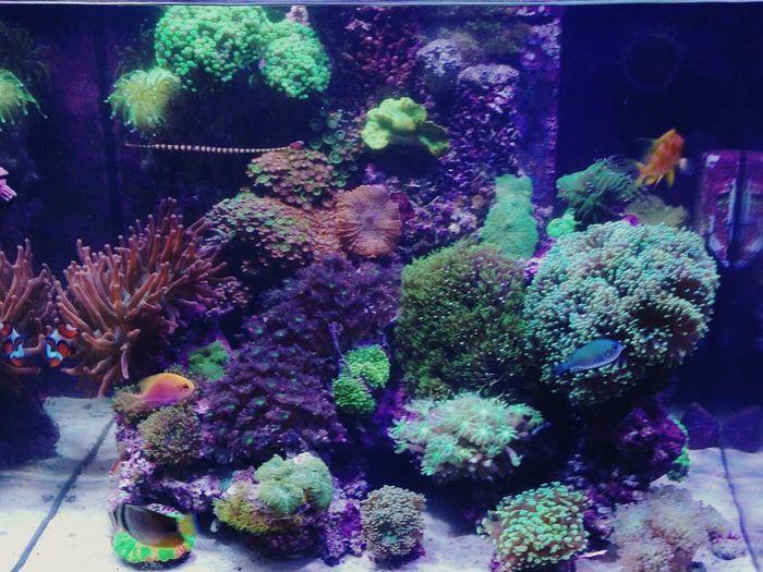 NANO REEF TANK Reef Fish Marine Life Fish Tank Fishkeeping Fiskeeper corals First Eyeem Photo