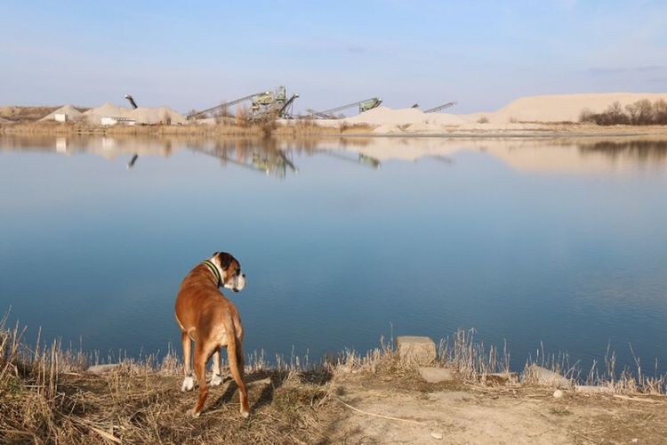 Gravel-pit romance Nature EyeEm Nature Lover Nature_collection Connected With Nature Water Reflections Dogs SweetLe