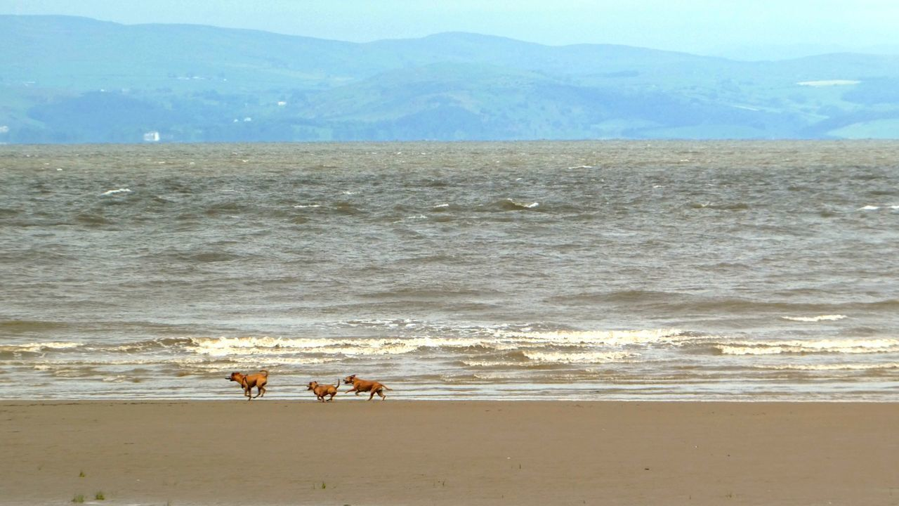 FUN, FUN, FUN.... Nature Beach Dogs Three Dogs Playing Outdoors No People Domestic Animals, Pets, Animal Themes Beauty In Nature Sky Animal Water Sand Animal Themes Irish Sea Dogs Of EyeEm Playmates Friendship Live For The Story The Great Outdoors - 2017 EyeEm Awards