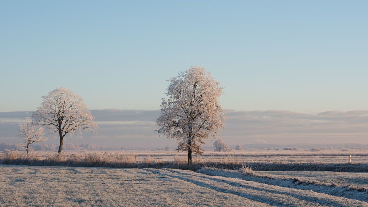 Winter in Ostfriesland Bare Trees Frozen Morning Nature No People Outdoors Scenics Single Tree Tree White Frost Winter