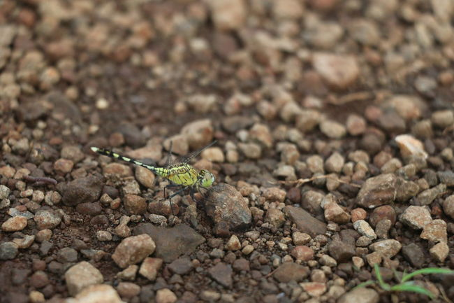 #Dragonfly Animal Themes Animals In The Wild Beginnings Brown Close-up Detail Dirty Dry Focus On Foreground Growing Insect Leaf Nature New Life No People One Animal Selective Focus Textured  Wildlife Zoology