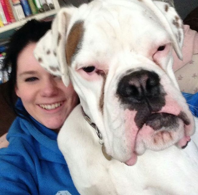 I look stupid but I just couldn't help laughing at that moody face 😂😂😂😂😂 Boxer Boxer Dogs Familydog Bestfriend Dogfriends Boxerpuppy Whiteboxer FunnyFaces Beautiful Uk