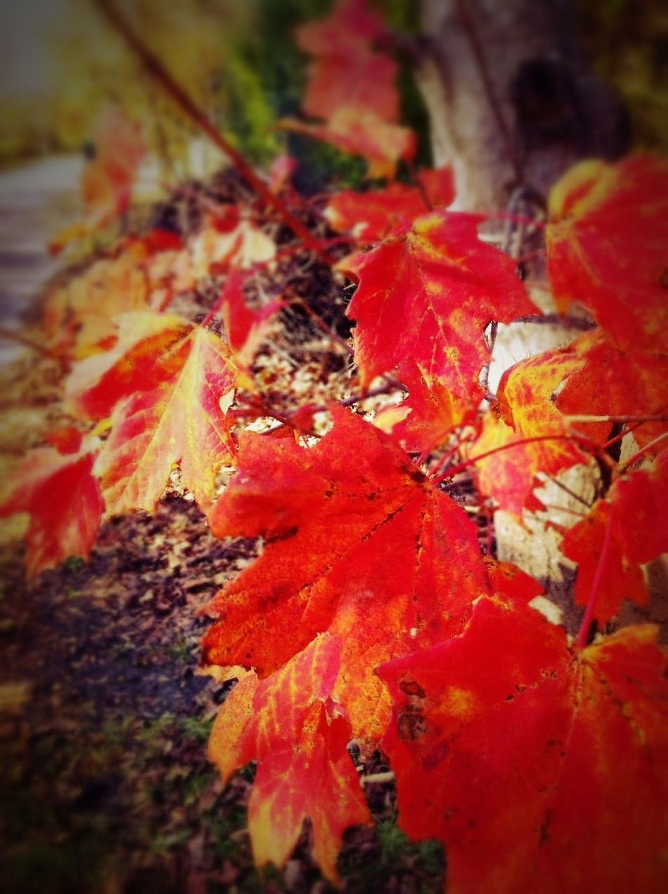 """Autumn is a second spring when every leaf is a flower."" ~ Albert Camus in East Quogue ""Autumn Is A Second Spring When Every Leaf Is A Flower.""  ~ Albert Camus"