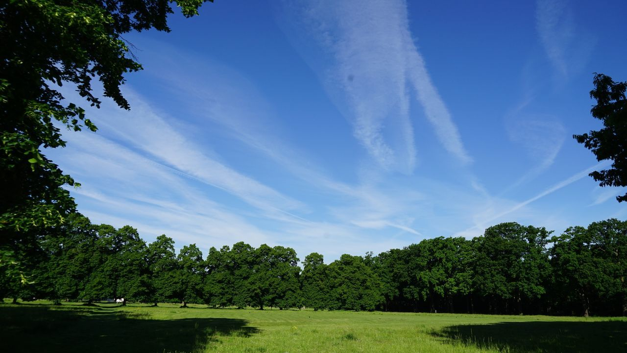 Tree Sky No People Growth Beauty In Nature Nature Tranquility Day Outdoors Springtime Beauty In Nature Trees And Nature Landscape Leaves Park SONY A7ii Grassland Outdoor Daylight Grass Area Trees Sky And Trees Blue Sky Blue Color Belgium
