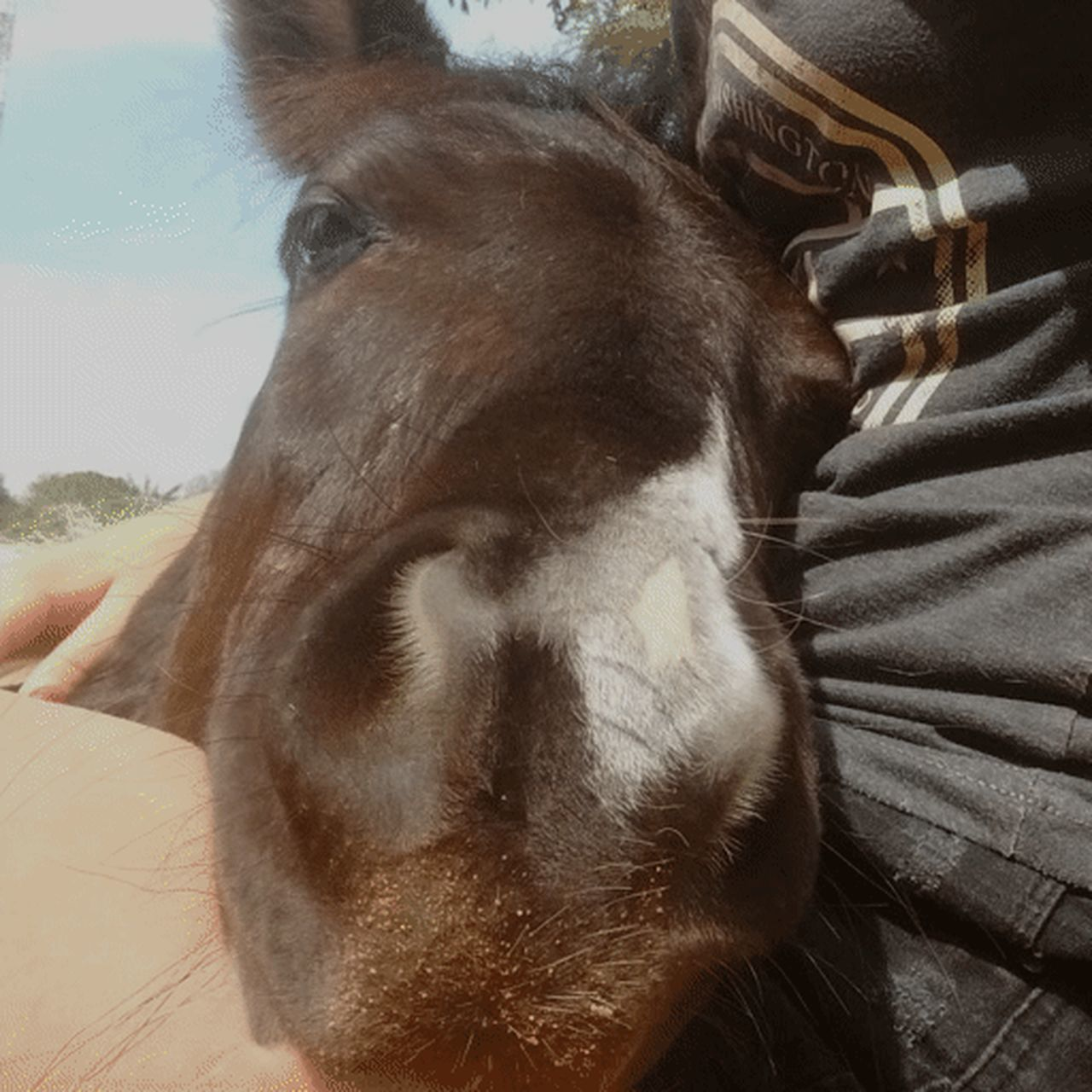 Dock Pets Day Horse Baby Horse