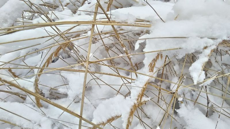 Winter Snow No People Cold Temperature Backgrounds Outdoors Day Nature Close-up Snowflake