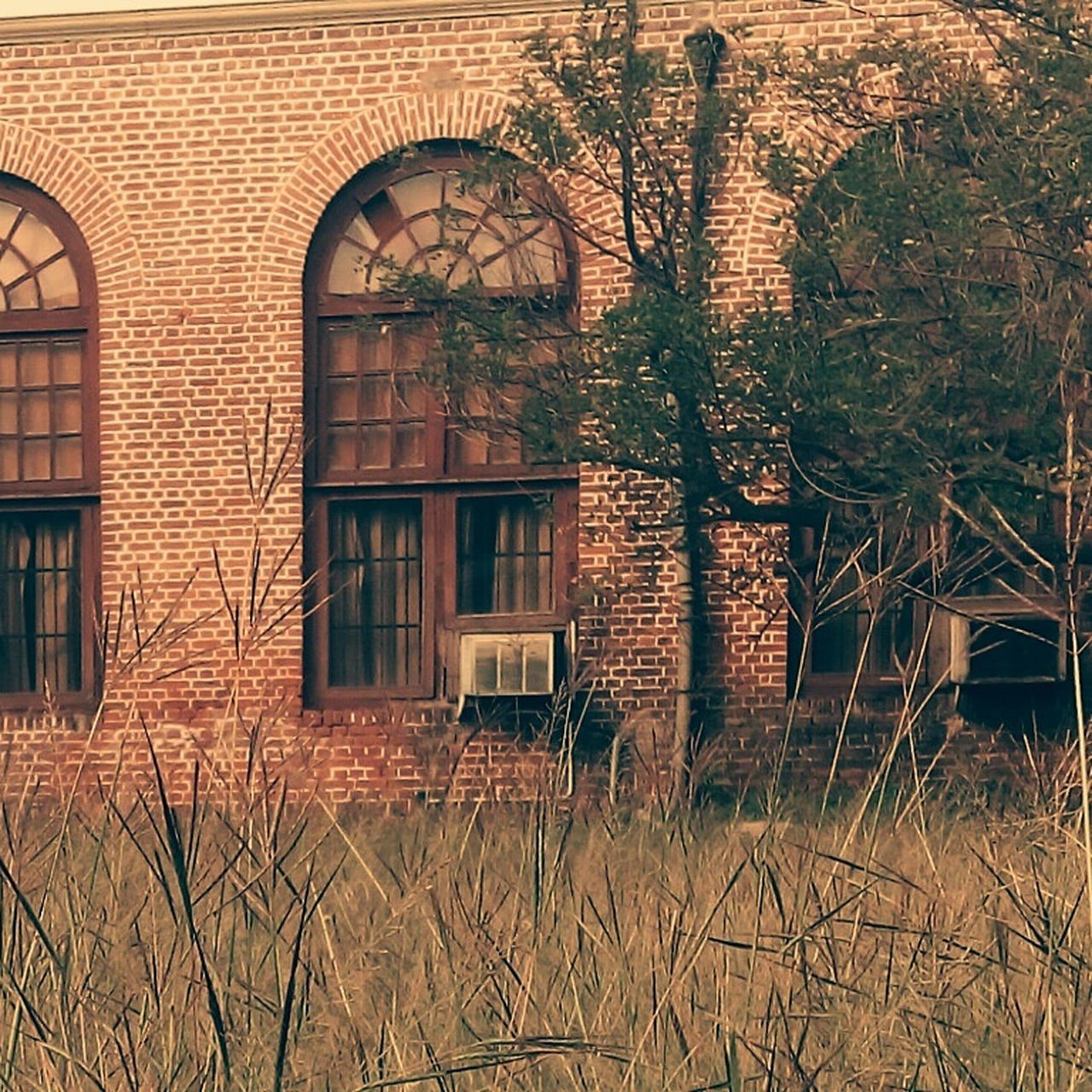 architecture, building exterior, built structure, day, abandoned, window, no people, outdoors, grass, tree, nature