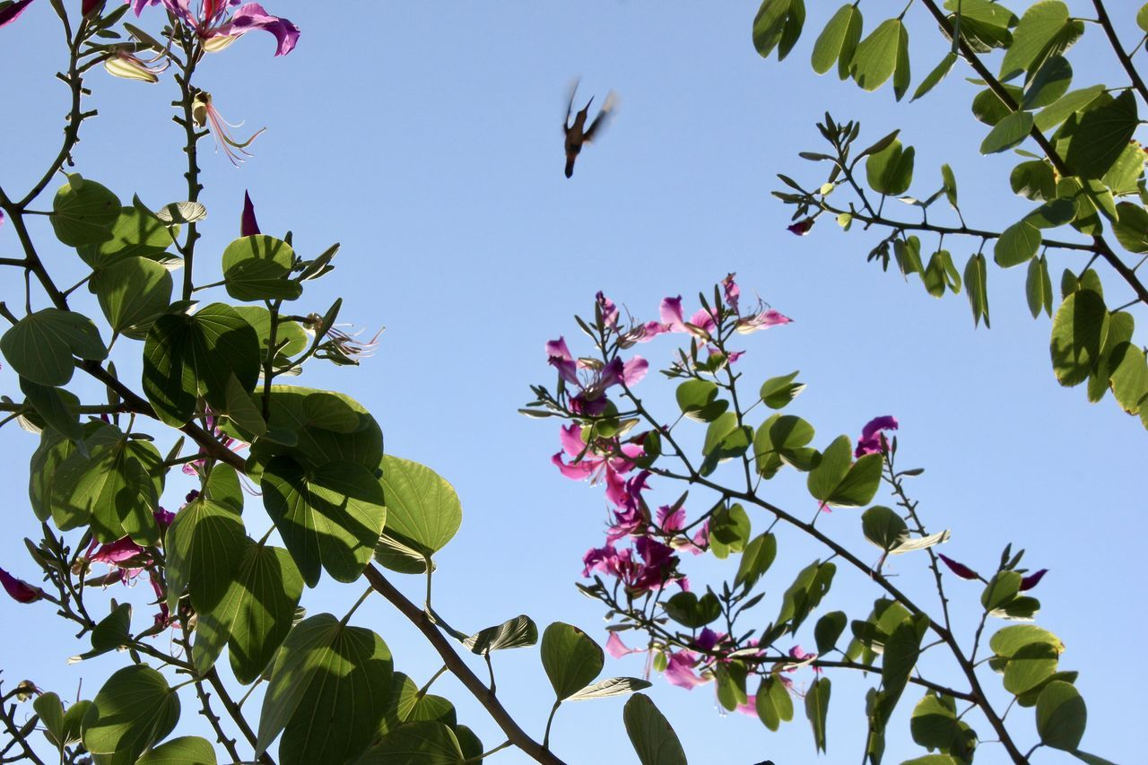 Beauty In Nature Bird Branch Clear Sky Close-up Day Flower Flower Head Fragility Freshness Growth Hummingbird Low Angle View Nature No People Outdoors Plant Sky Tree