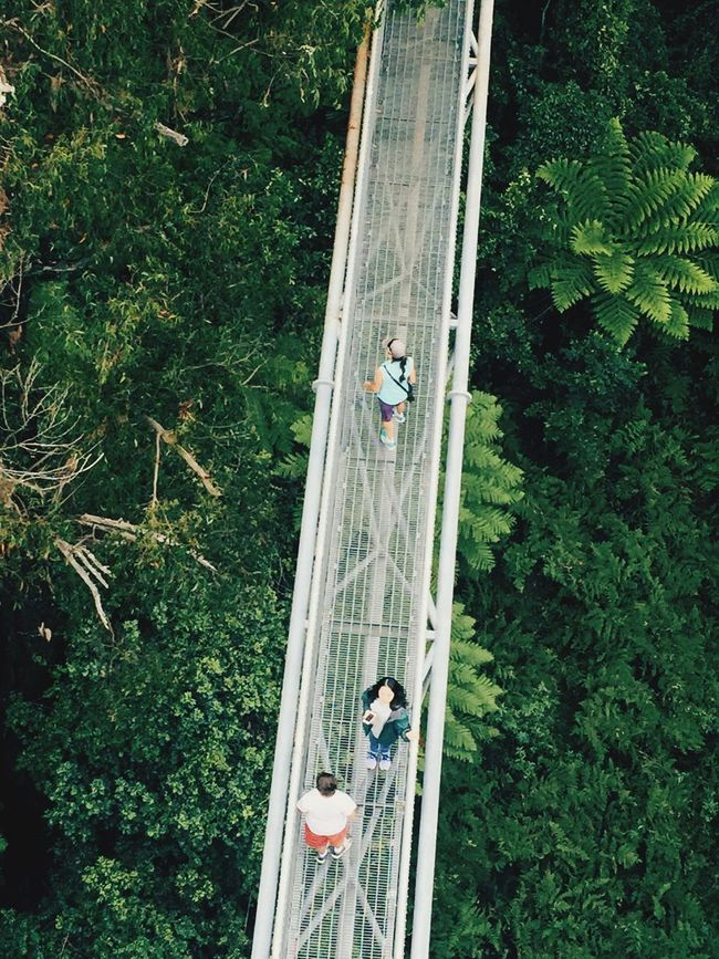 People And Places Treetop Walking High Angle View Enjoyment Park Surrounded By Nature Tasmania, Australia