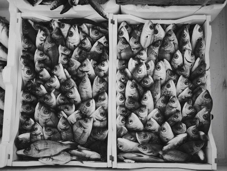 Fish Fish Market Blackandwhite