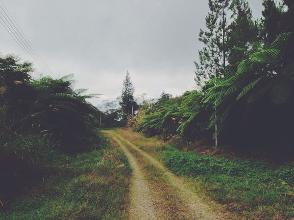 Nature Trees Roadtrip Green