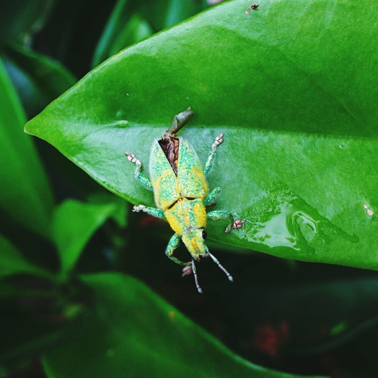 animals in the wild, animal themes, green color, insect, leaf, one animal, nature, animal wildlife, no people, close-up, day, outdoors, plant, grasshopper, growth, beauty in nature