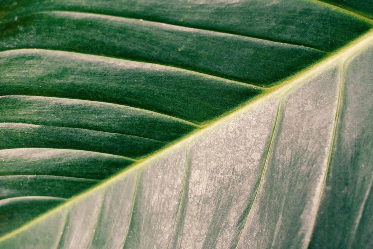 Beauty In Nature Close-up Green Color Leaf Nature Plant
