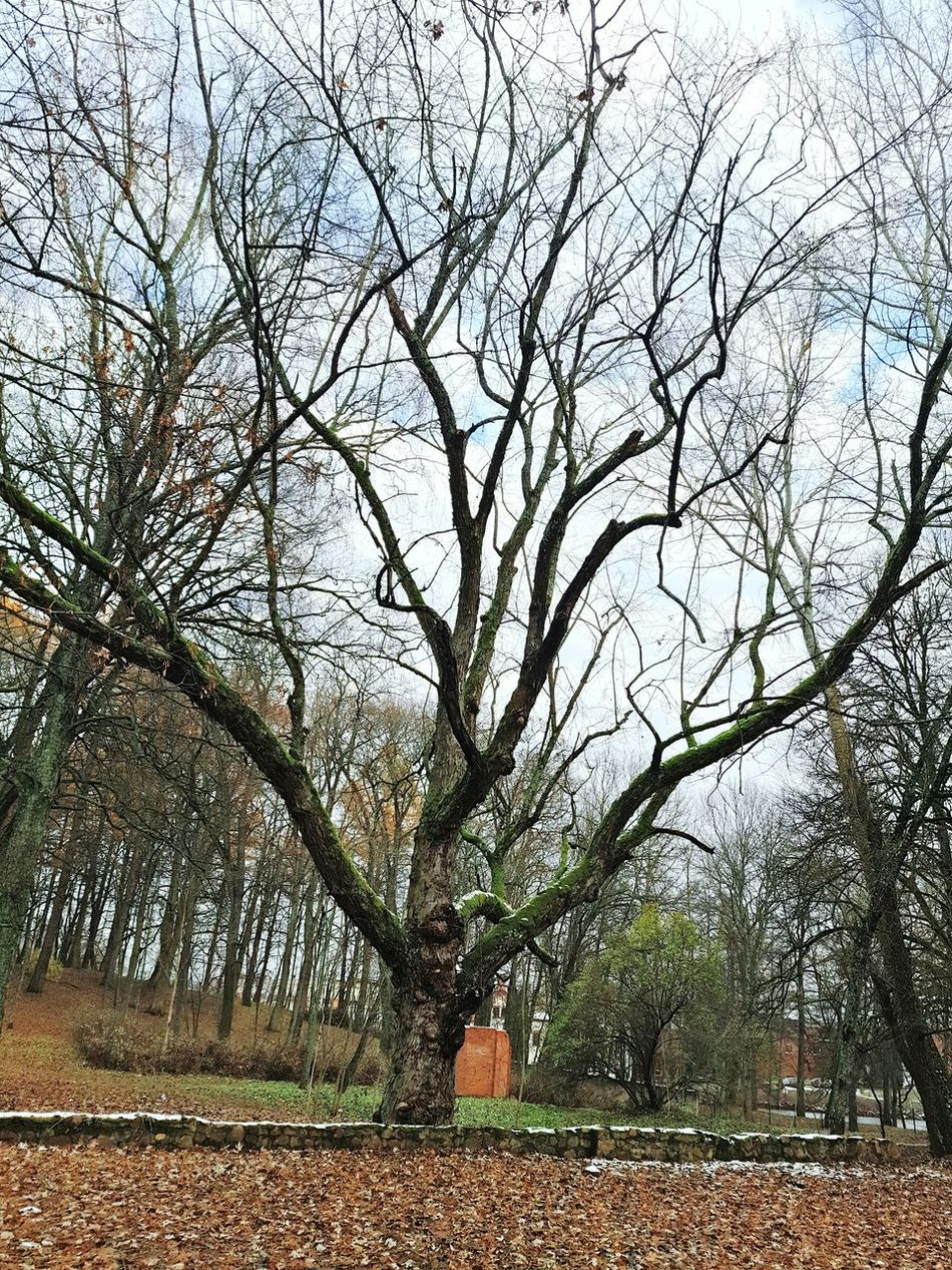 Lentvaris Ancient Tree Castle Outumn Beauty In Nature Nature Outdoors Lithuania