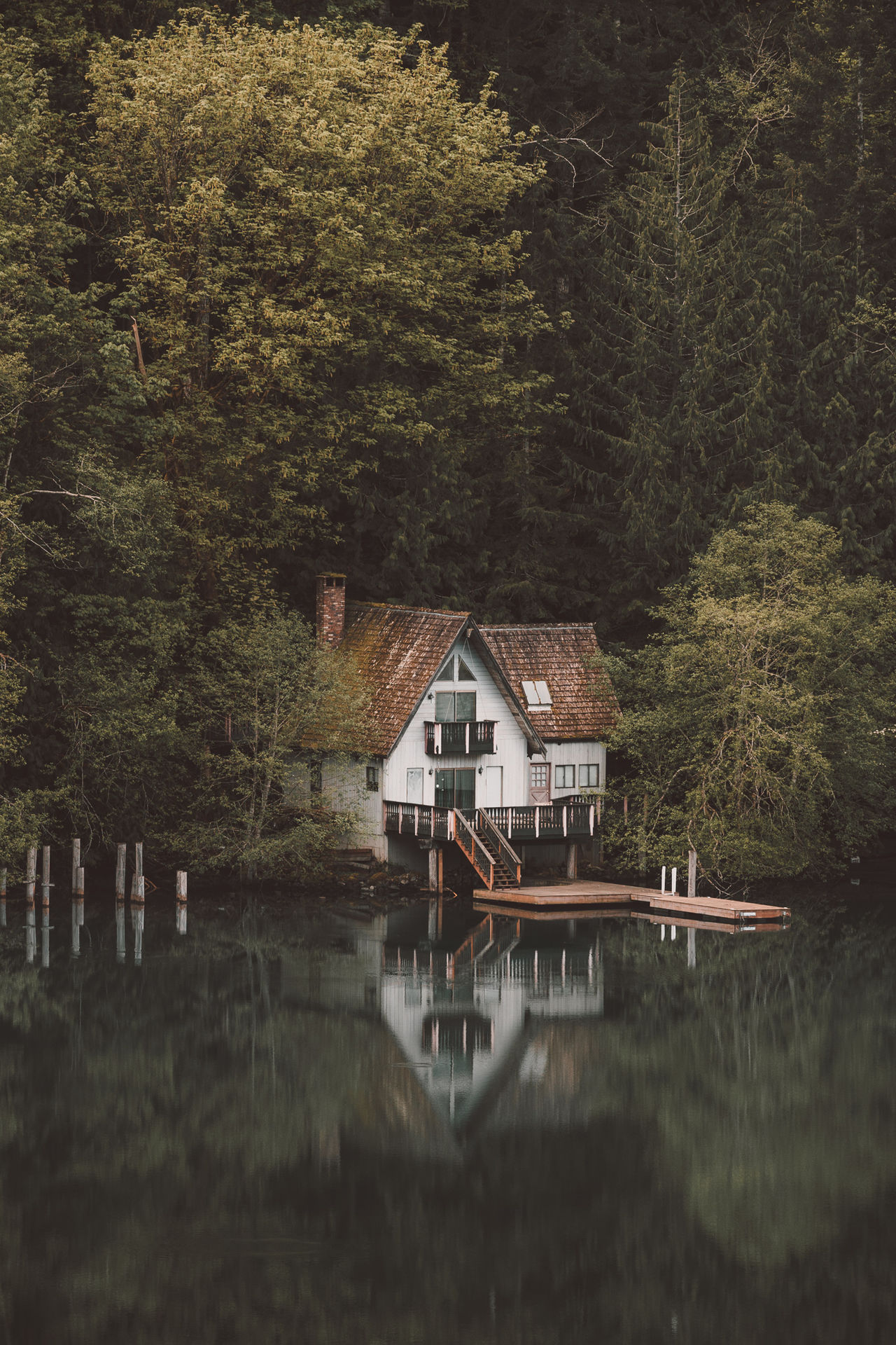 Lakeside Cabin Architecture Beauty In Nature Built Structure Cabin Cat Green Color Landscape Nature Olympic National Park Outdoors PNW Reflection Scenics Tranquil Scene