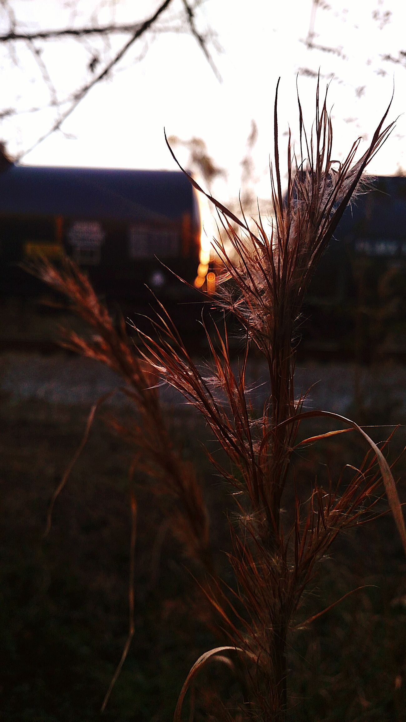 Nature Photography Nature Nature_collection Railroad Photography Freight Transportation Freight Train Train Cars Rail Transportation Railway Track Railroad Evening Evening View Evening Light