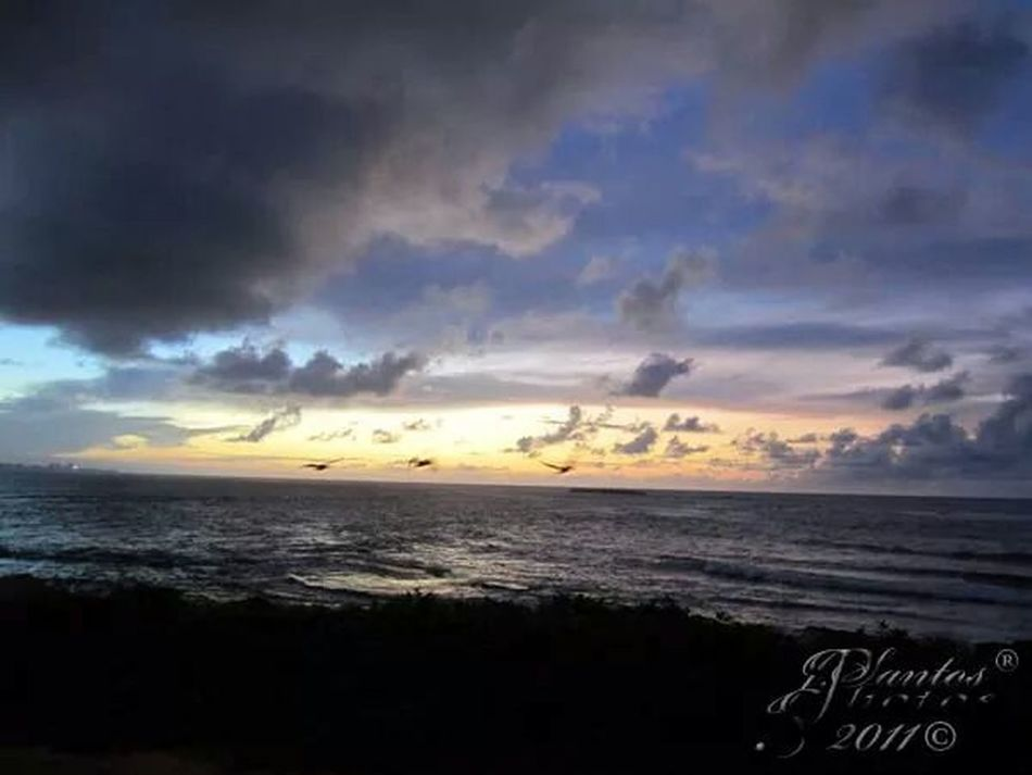 Discover Puerto Rico The Reef Puerto Rico Sunset