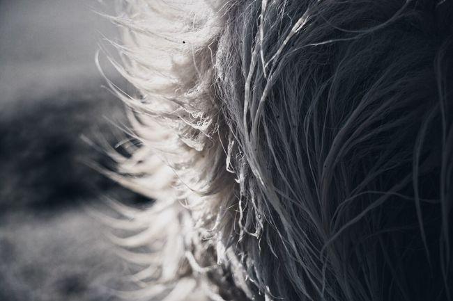 Dog Golden Retriever Ghiro I Love My Dog My Dog Is A Model  We Are Photography, We Are EyeEm EyeEm Dogs