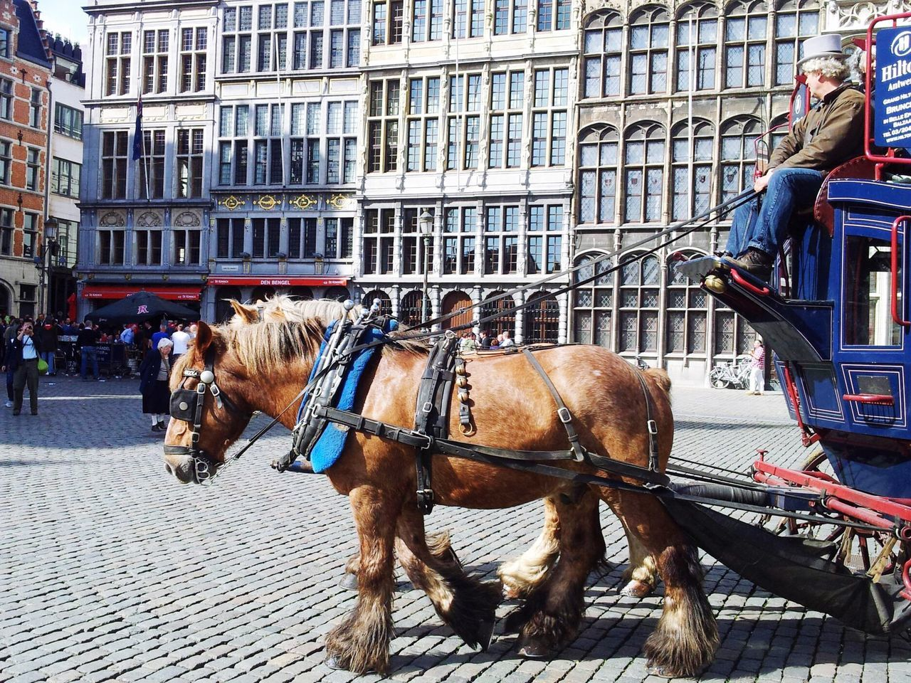 Antverpen Horse Building Exterior City Street Architecture Built Structure Outdoors Real People Mammal Two People Travel Destinations Horsedrawn Day Domestic Animals Men Horse Cart People Adult