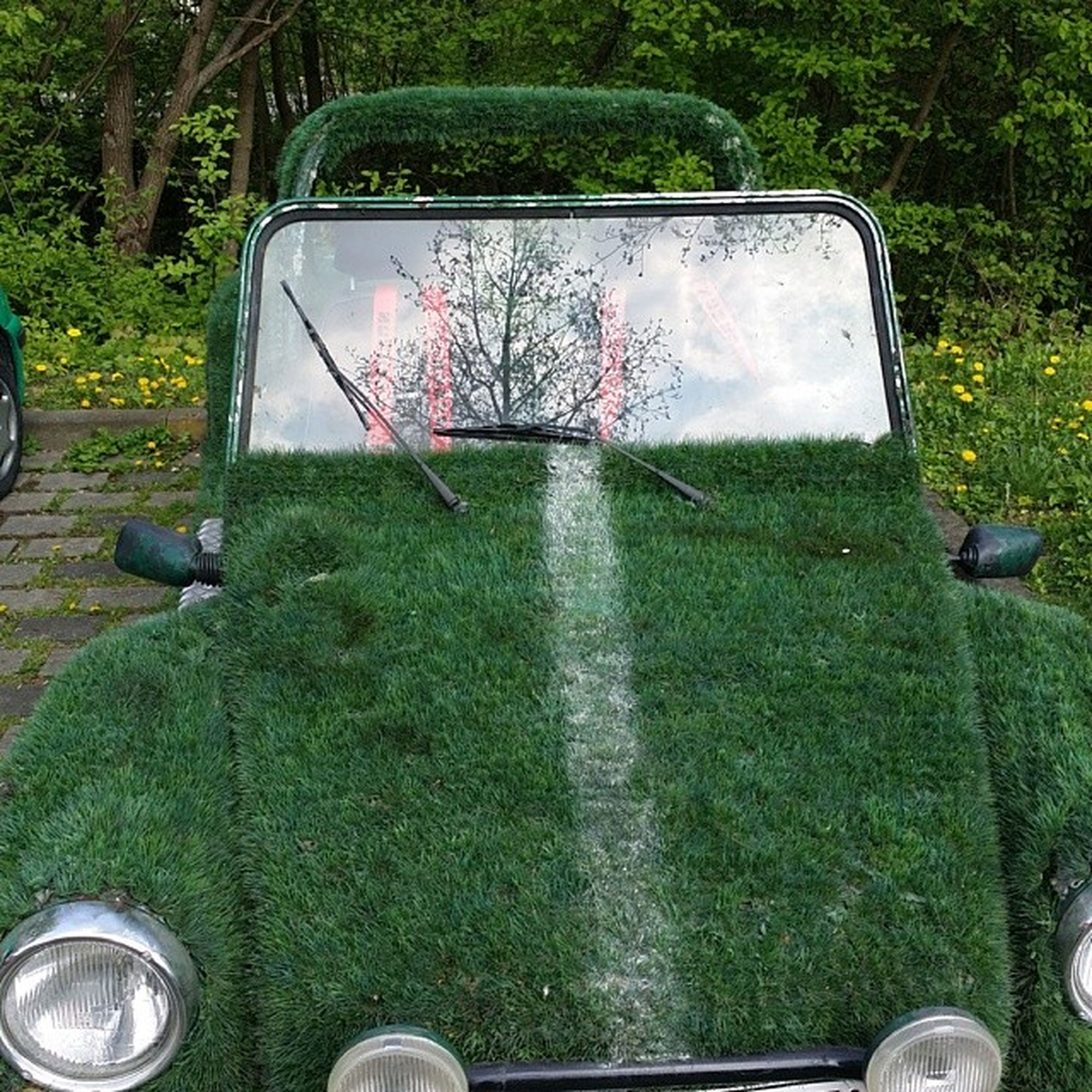 grass, green color, tree, plant, grassy, one person, growth, glass - material, day, transportation, land vehicle, mode of transport, transparent, reflection, field, car, nature, lawn, outdoors, part of