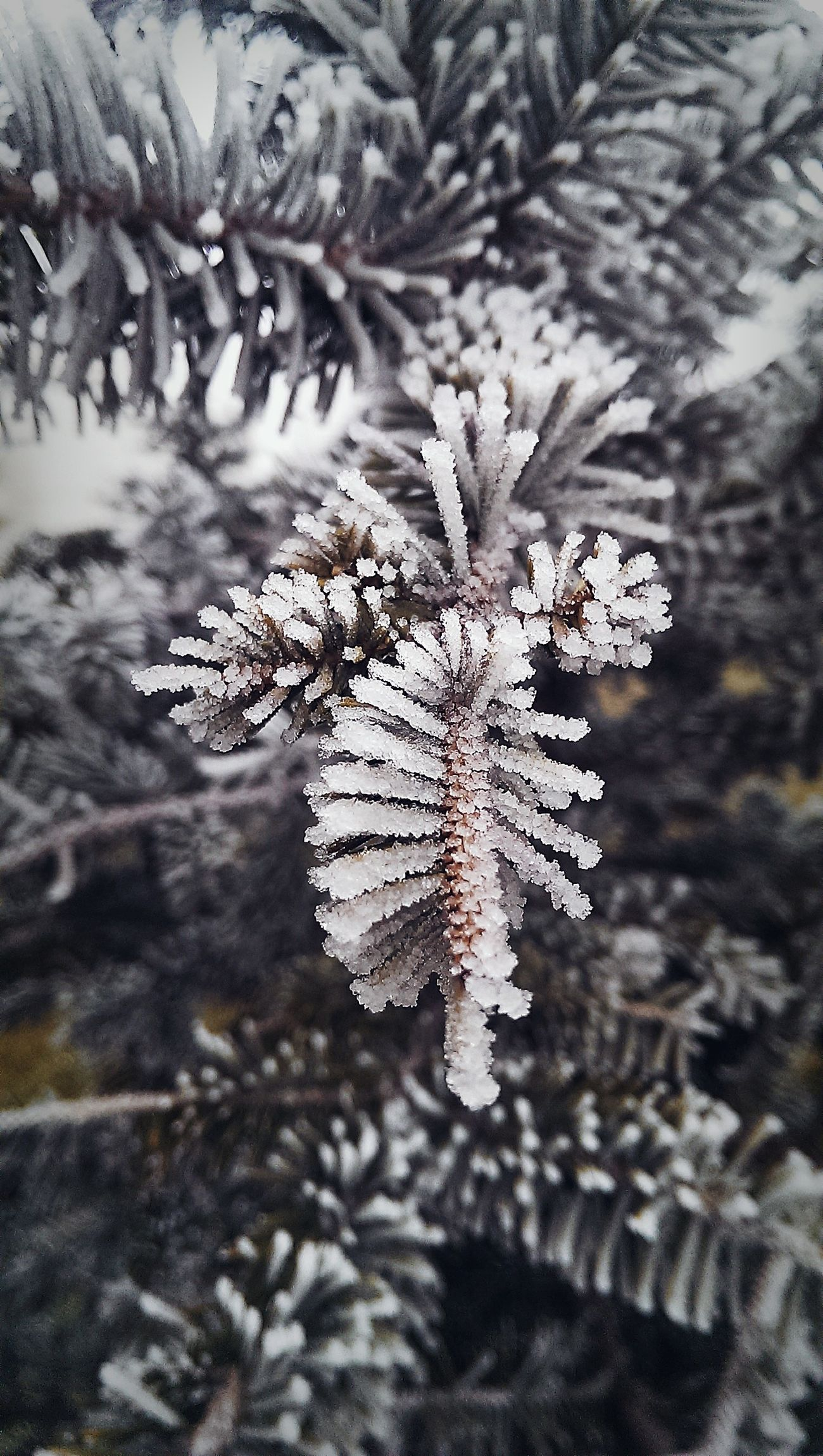 EyeEm Eye4photography  EyeEm Best Shots EyeEm Best Edits EyeEm Nature Lover Nature_collection Naturelovers Nature Nature_perfection Winter Wintertime Winter2016 ❄ Hoarfrost Natural Beauty Taking Photos Winter2016
