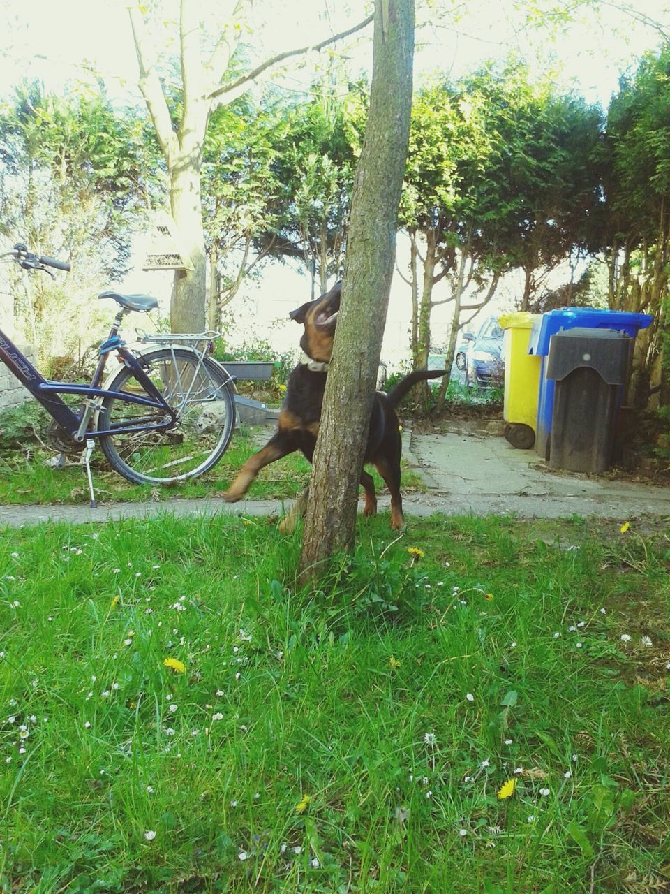 bicycle, transportation, grass, land vehicle, mode of transport, tree, stationary, day, nature, growth, outdoors, green color, field, no people, tree trunk, animal themes, mammal