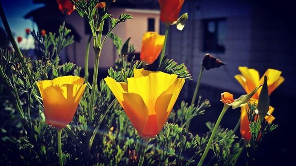 Throwback Onceuponatime Kodaidairies Yellow Flowers Outside Cottage Dancing In Breeze Blossoms  Colors Of Nature Pure Happy Macro Photography Showmeyourflowers Peace Rainbow Sunshine Sunset Sun