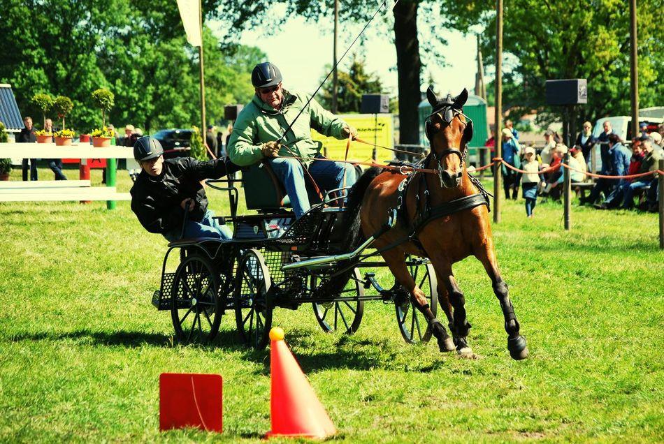 Horse Grass Pferd Pferdekutsche Hackney Cab Hackney Cabs Fahrturnier Turnier Wettkampf Sport Sports Photography