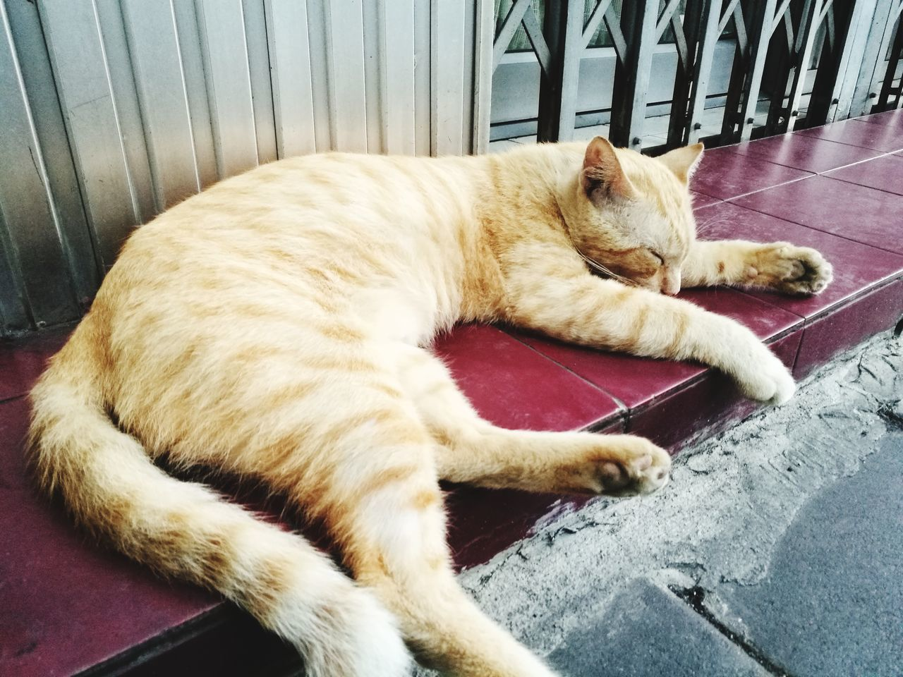 pets, domestic animals, mammal, animal themes, domestic cat, relaxation, one animal, sleeping, feline, lying down, dog, no people, day, outdoors