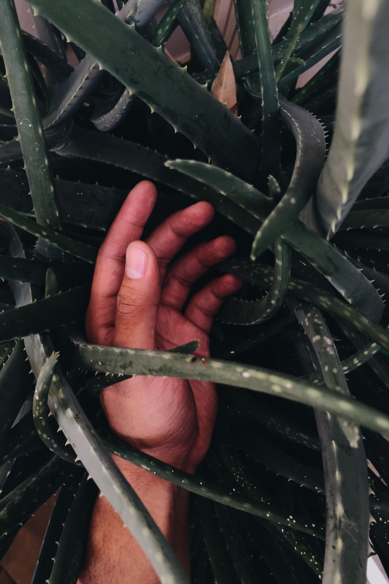 Thorn Splinter Prickle Nature Green Hand