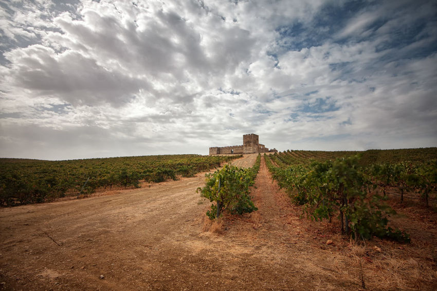 Castle Ancient Ancient Civilization Architecture Beauty In Nature Blue Cloud - Sky Clouds Day History Landscape Nature No People Outdoors Road Rural Scene Scenics Sky The Way Forward Tranquility Travel Destinations Wine