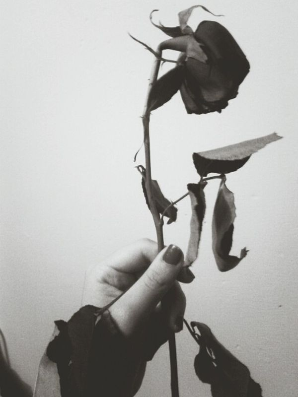 eveeeeevery rose has its thorn.
