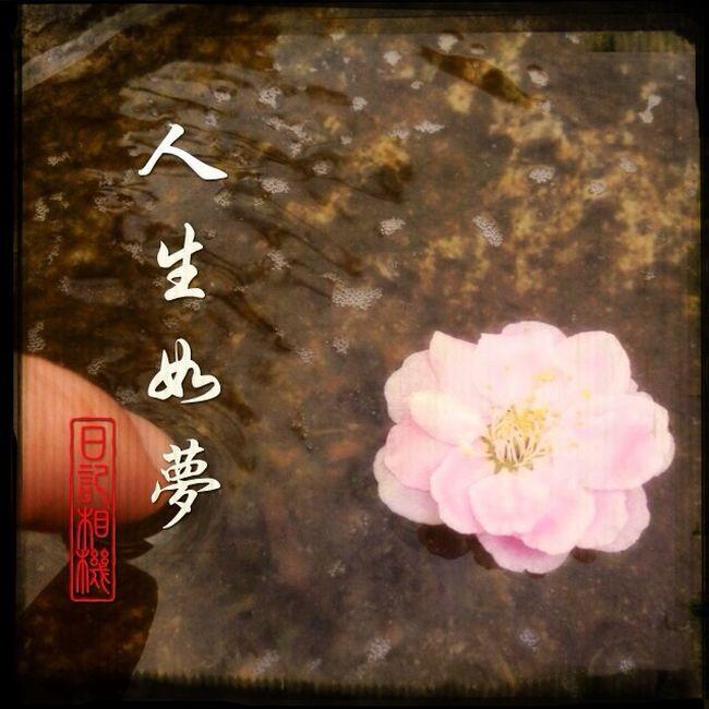 Ume Flower Japan EyeEm Nature Lover