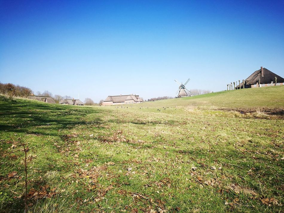 Freilichtmuseum Molfsee Clear Sky Blue Nature Landscape Outdoors Grass No People Day Old House Windmill Museum
