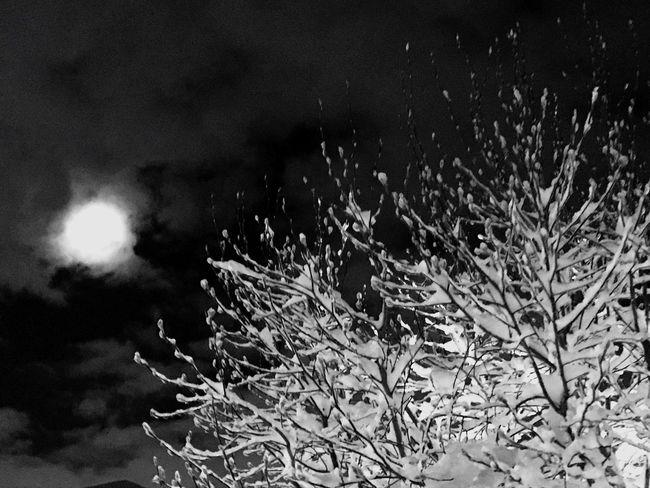 Get Outside Snowynight Nature Nature Lover Wintermoon Winterwonderland Snow Wintertime Moonlight Beauty In Nature Snowy Trees