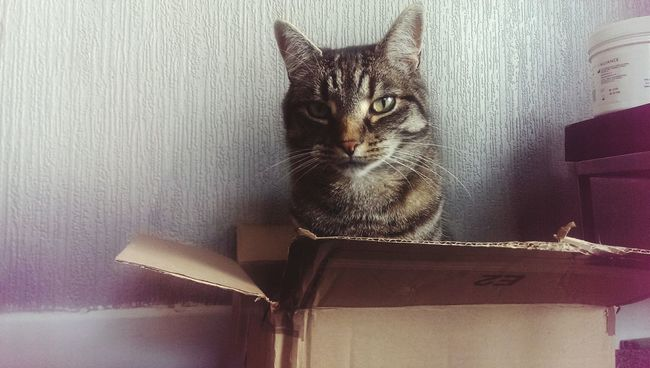 Why do cats like boxes so much. Cat Cats Cats In A Box Cute Male Feralcat Feral  Box Boxes Kitty