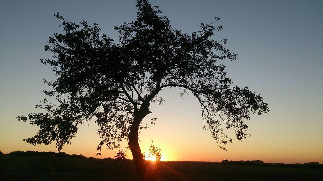 Sunset Tree Silhouette Sun Field Tranquil Scene Branch Landscape Nature Scenics Clear Sky Beauty In Nature Outdoors No People Non-urban Scene Remote Sky Czech Republic XPERIA Xperiaz First Eyeem Photo Czechrepublic Sony Fields Dark