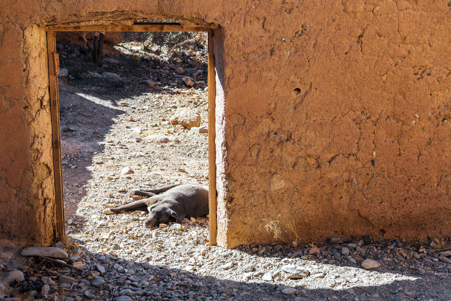 Lazy dog lying in the sun in the doorway of an old abandoned adobe building in the small town of Espicaya near Tupiza, Bolivia Amazing Andes Beauty Bolivia Cactus Canyon Color Countryside Desert Destination Dog Formation Formations High Hills Landscape Mountain Nature Pet Rock Rocks South America Travel TUPIZA Valley