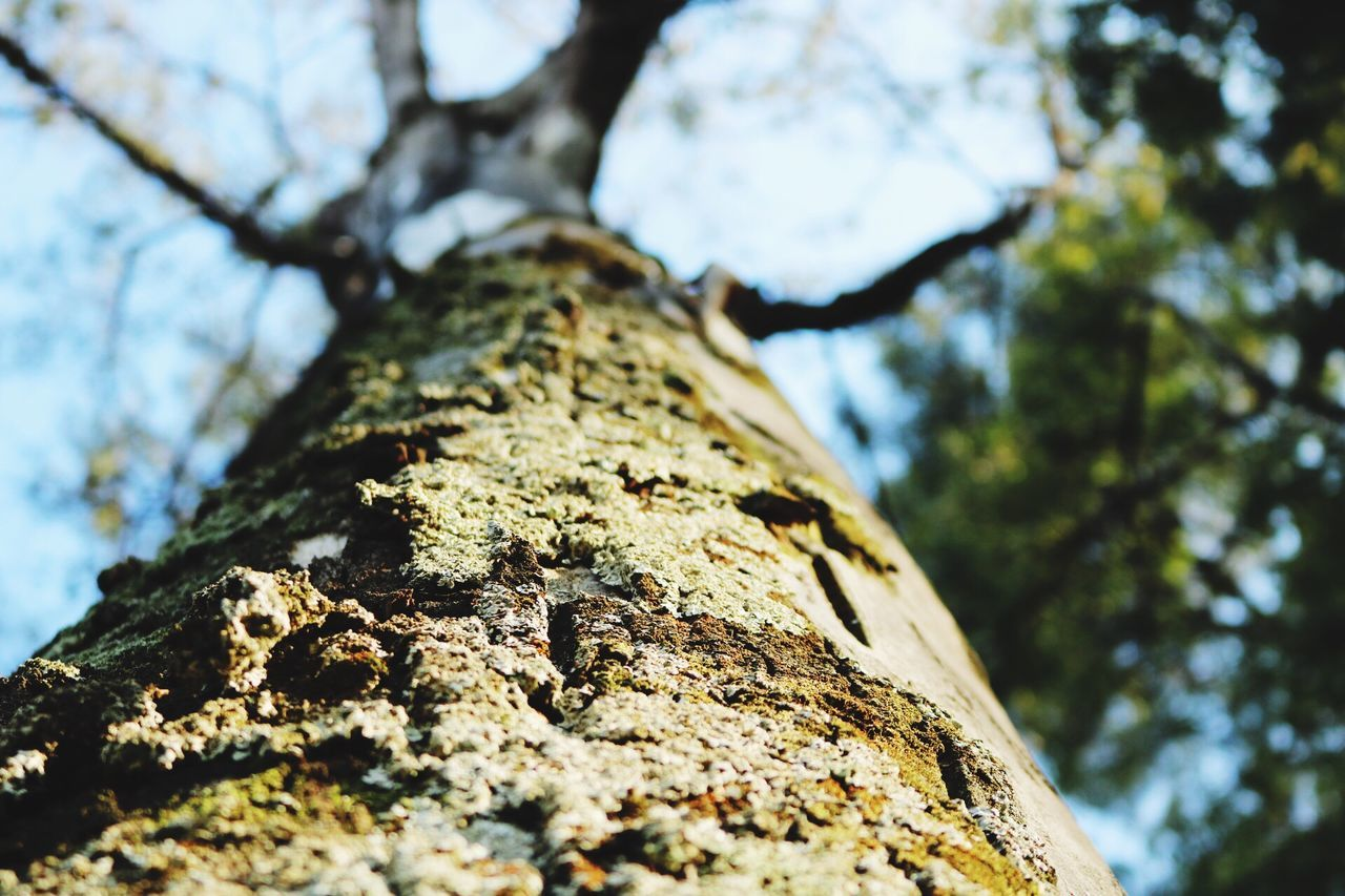 Tree trunk Tree Trunk Tree Nature Low Angle View Wood - Material Textured  Bark Outdoors Growth Beauty In Nature Branch Differential Focus árbol Branches And Sky Sky The Secret Spaces