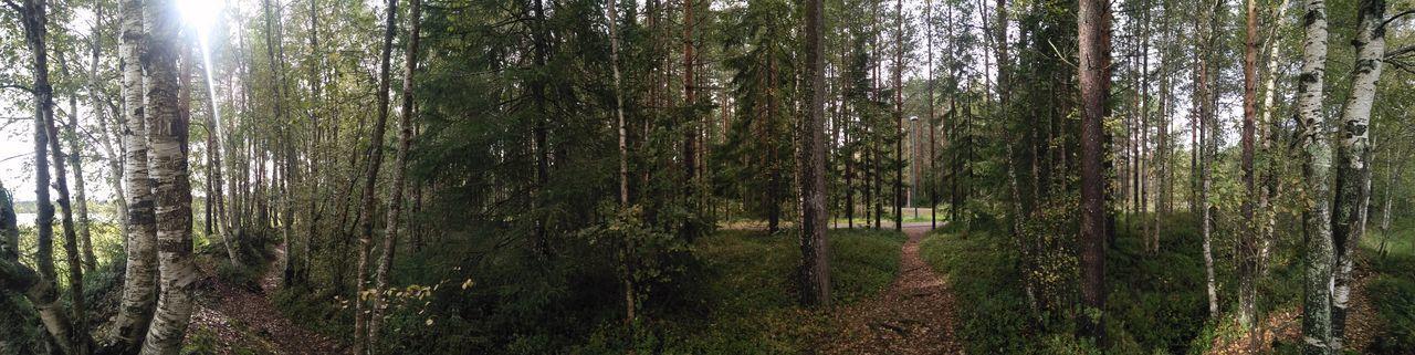 Birch Tree Finlad Nature Nature_collection Oulu Oulu, Finland Oulun Yliopisto / University Of Oulu Scandinavia