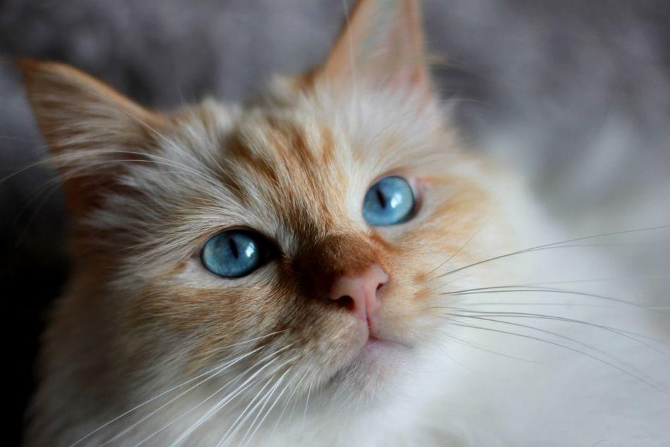 Beautiful stock photos of eyes, Alertness, Animal Eye, Animal Head, Animal Themes