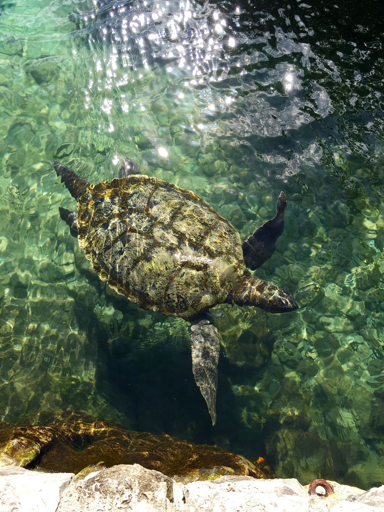 Wildlife Turtle Mexico Sea Turtle Enclosure Animal Themes Swimming Reptile Animals In The Wild Sea Life Sea Water Nature Underwater Animal Wildlife No People Day Outdoors Beauty In Nature UnderSea