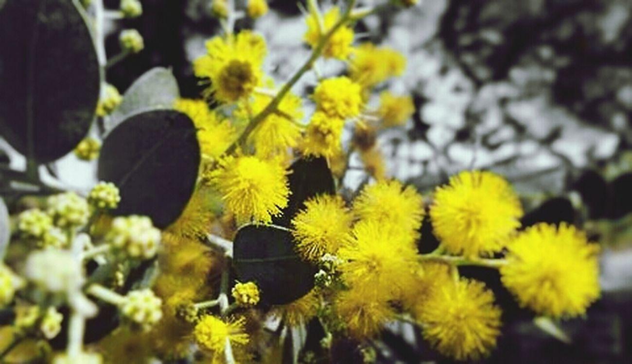 Hoa vàng mấy độ...